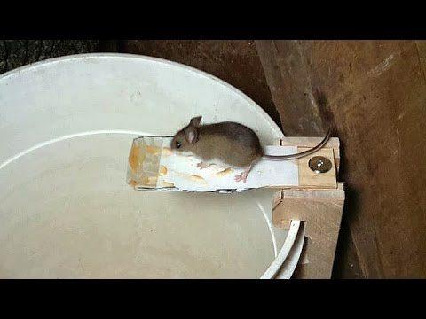 muizenval maken youtube – geïmpregneerd hout beitsen