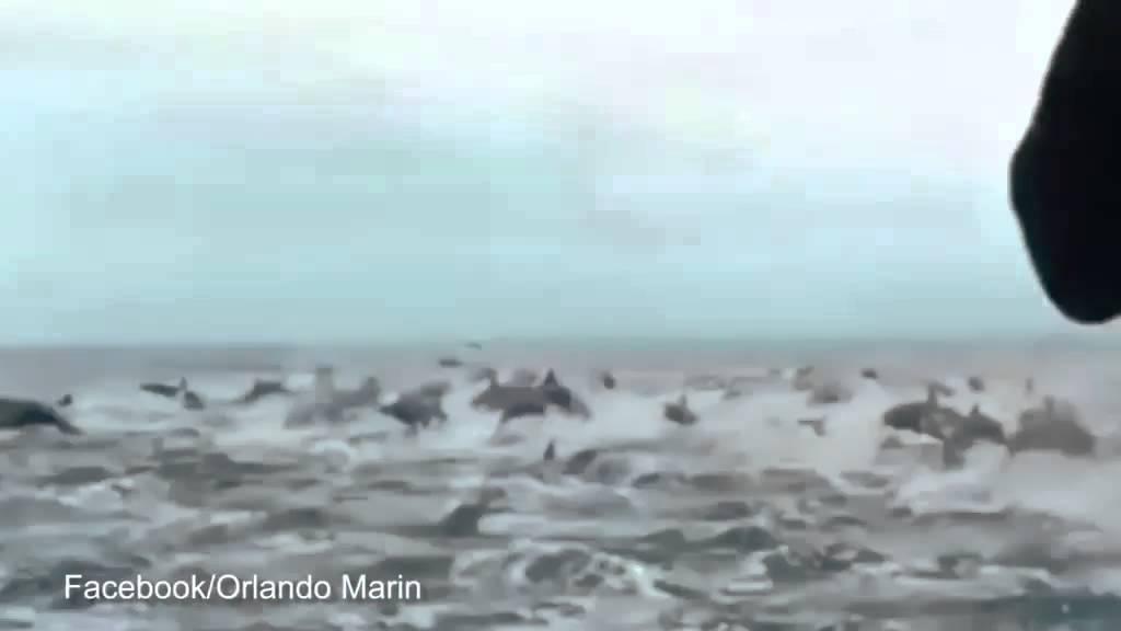 Immense groep dolfijnen verrassen toeristen