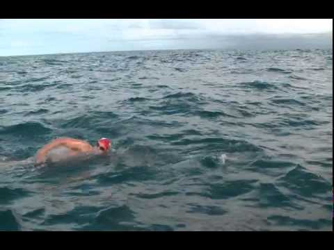 Zwemmer gered door dolfijnen