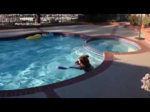 Beer koelt af in zwembad