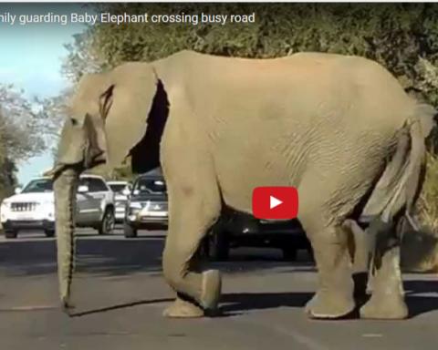 olifant-op-weg