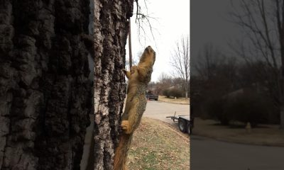 Bevroren eekhoorn